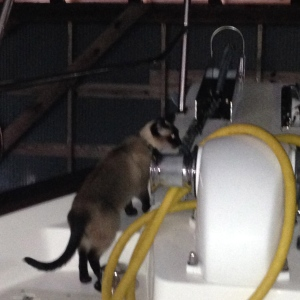 Pema exploring the boat!