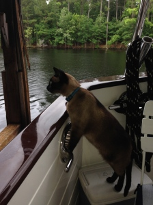 Pema watching fish on the surface of the water