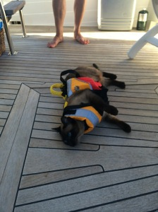 Pema in her life jacket