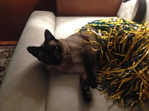 Pema - Packer Fan!