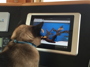 Pema watching some fish TV on the IPad