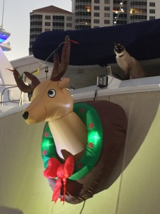 Rudolph - having Ming in the background was a bonus!